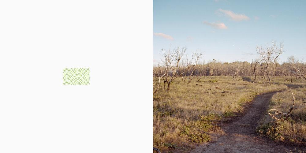 Forest or scrub, sparse_colour_tone.jpg