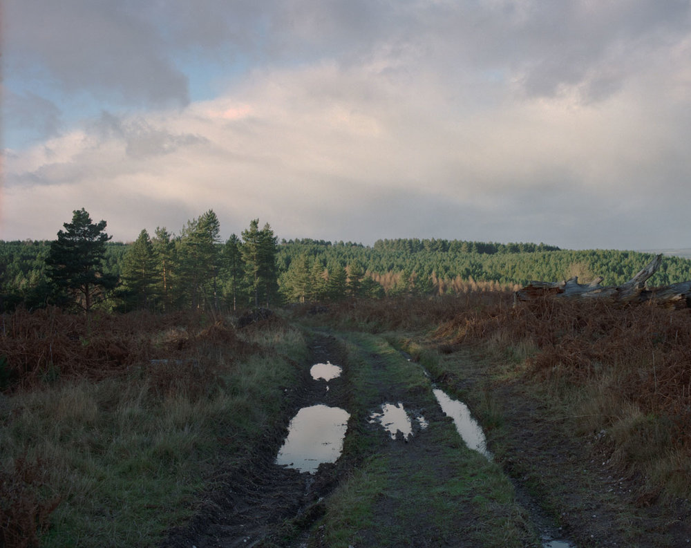 Chris_Round-Cannock_Chase_Unsettled-Forest-02.jpg