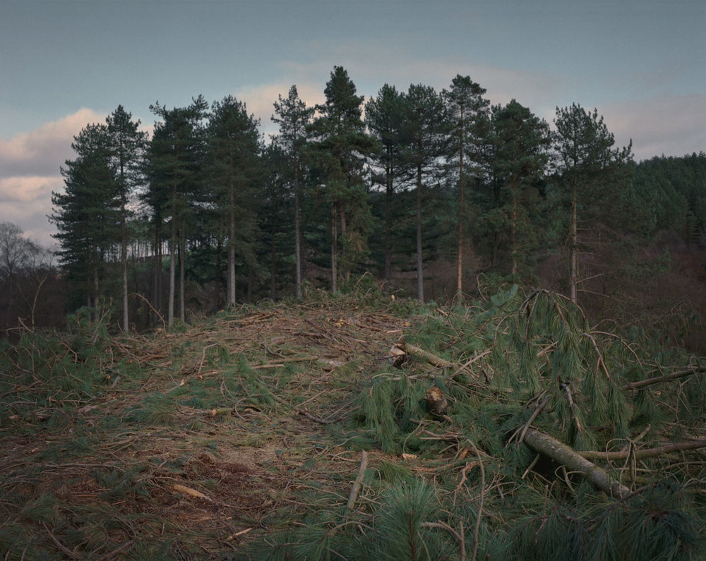 Chris_Round-Cannock_Chase_Unsettled-Forest-03.jpg