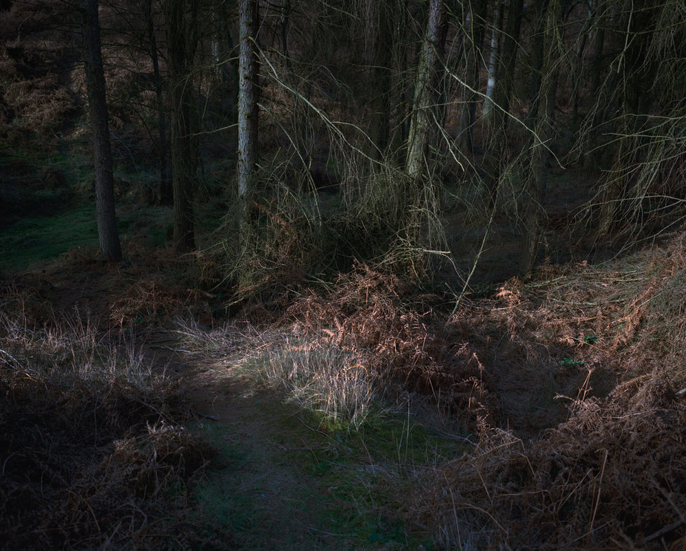 Chris_Round-Cannock_Chase_Unsettled-Forest-05.jpg