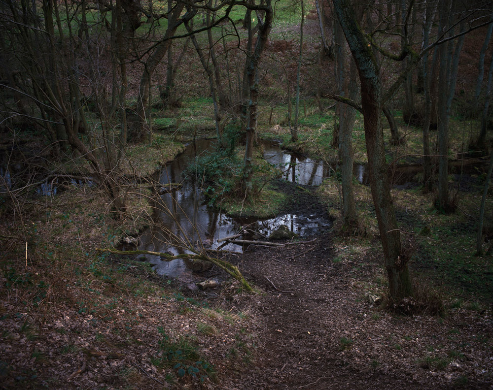 Chris_Round-Cannock_Chase_Unsettled-Forest-06.jpg