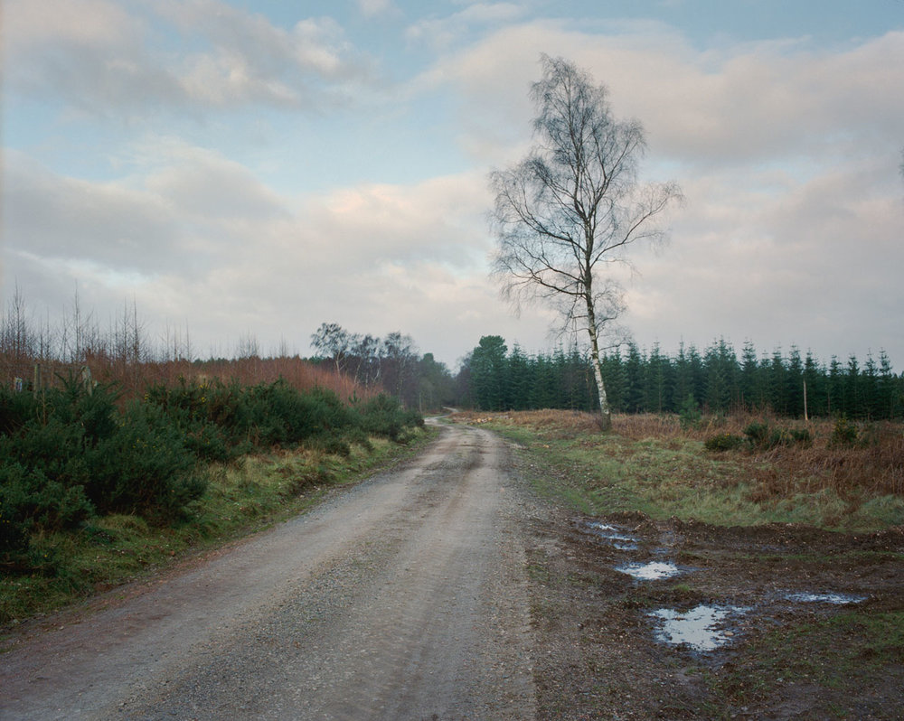 Chris_Round-Cannock_Chase_Unsettled-Forest-09.jpg