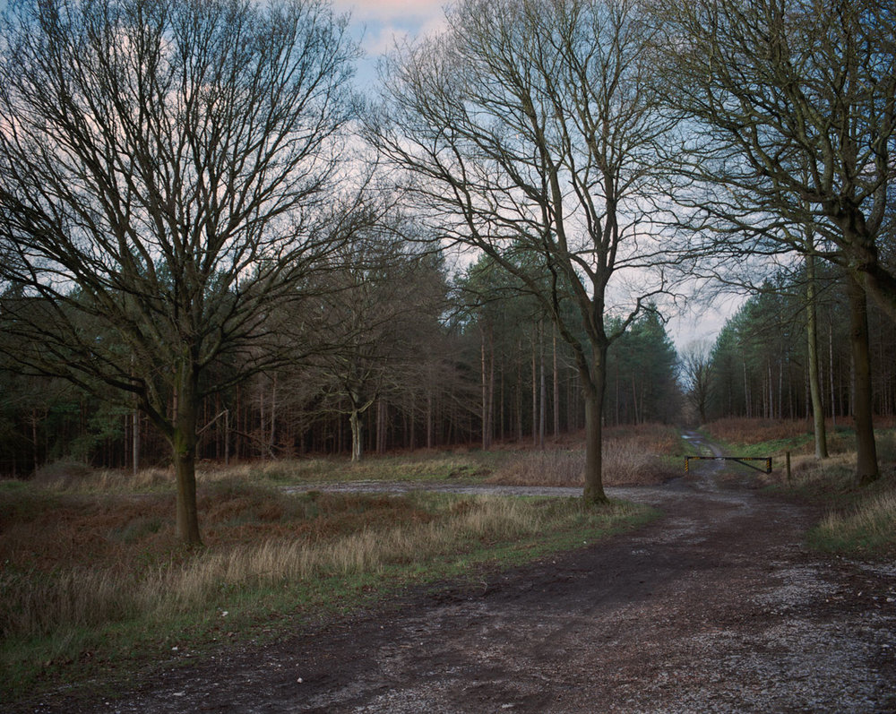 Chris_Round-Cannock_Chase_Unsettled-Forest-08.jpg