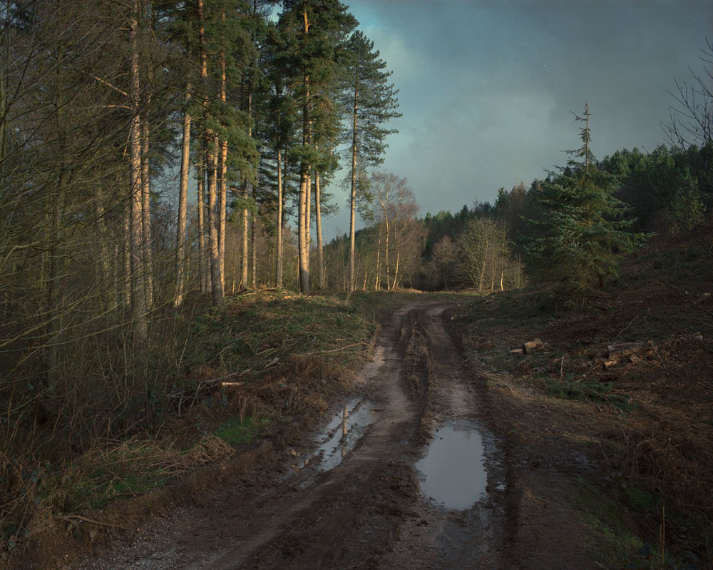 Chris_Round-Cannock_Chase_Unsettled-Forest-11.jpg