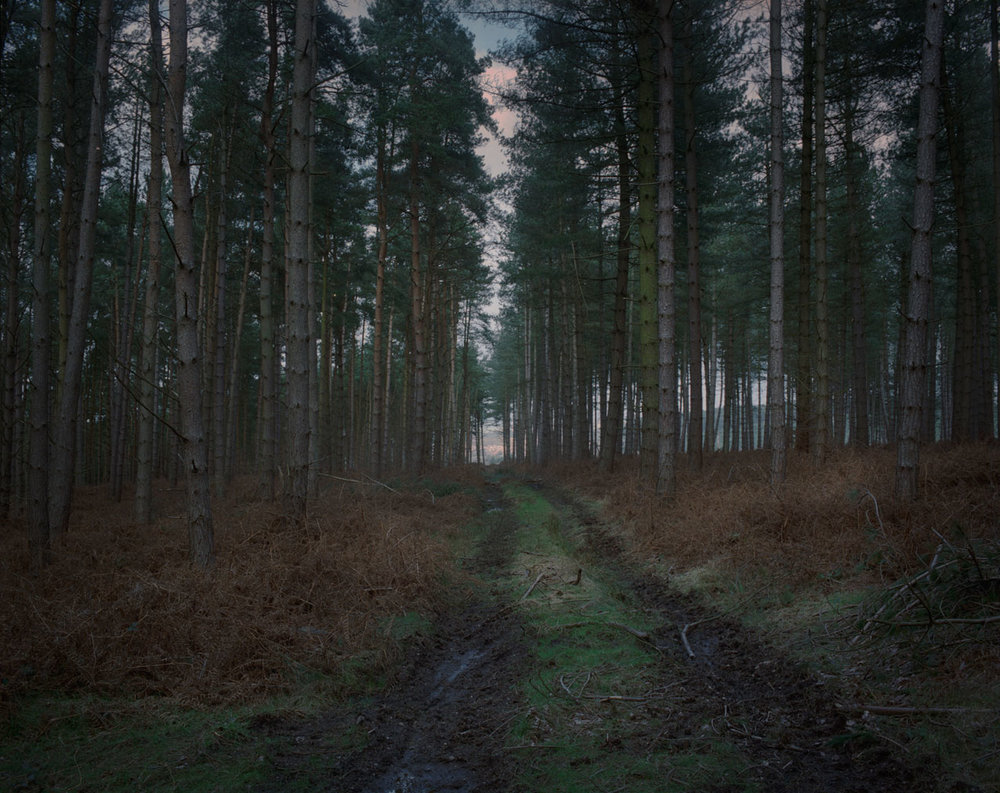 Chris_Round-Cannock_Chase_Unsettled-Forest-13.jpg
