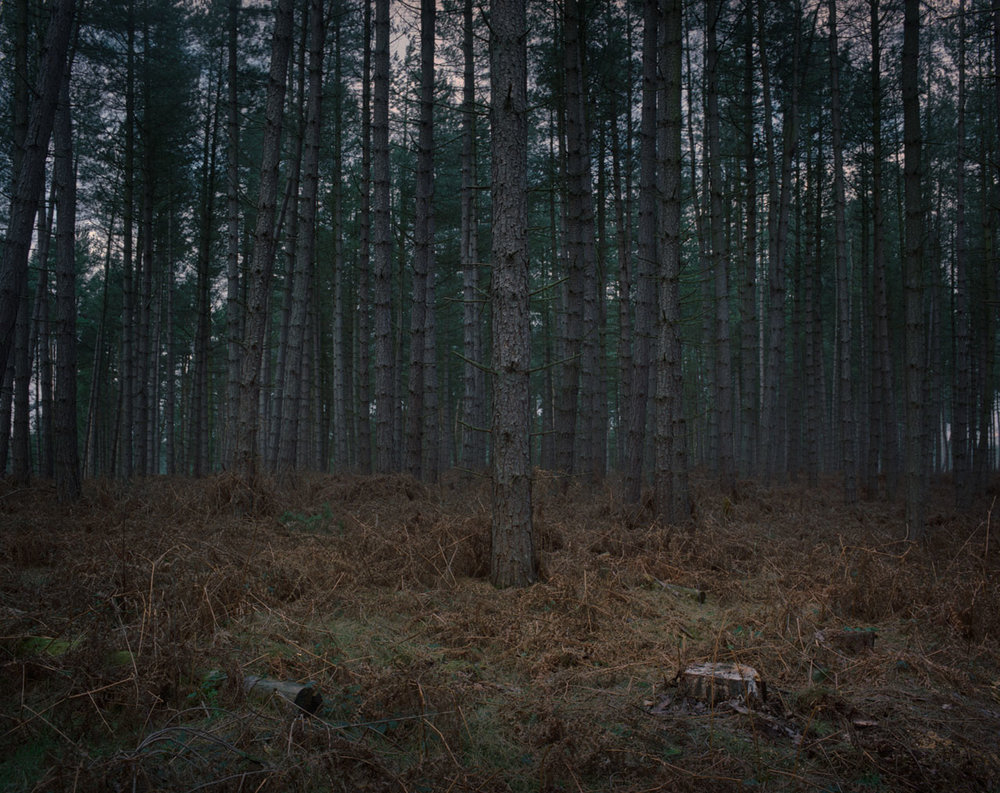 Chris_Round-Cannock_Chase_Unsettled-Forest-15.jpg