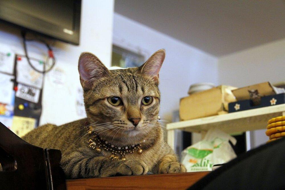 貓咪先生的朋友6