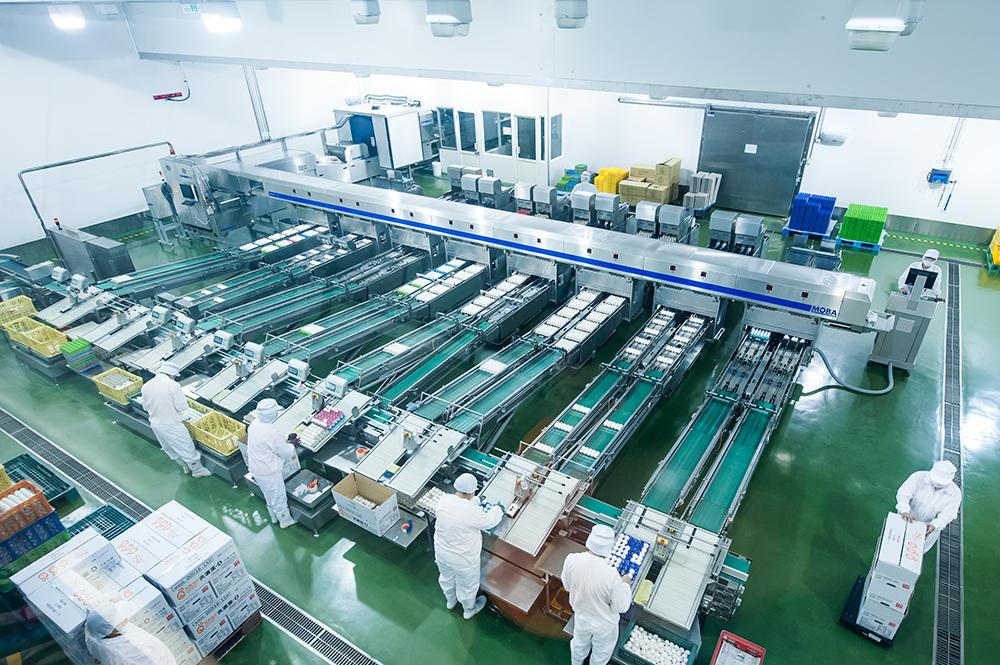 從農場到工廠一條龍式的全自動洗選設備