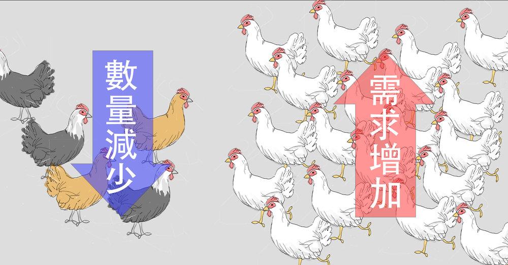 由於白肉雞不在禁宰令限制內,消費者對於土雞肉的需求會轉移到白肉雞,導致近一周白肉雞價格上漲。