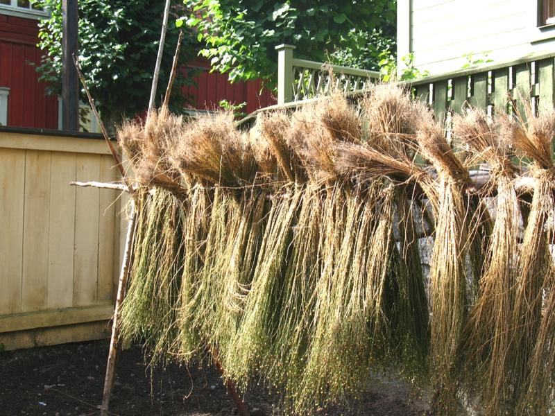 Drying Flax for Linen Production. Photo:Vilseskogen