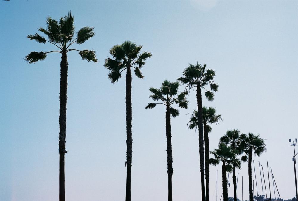 LA - Photo.png