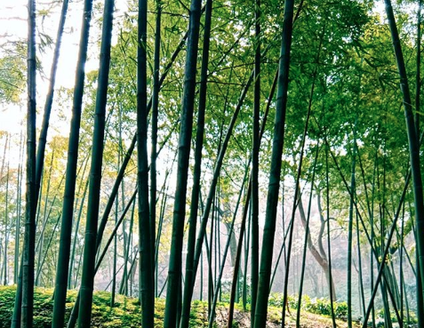 - 1. Der fældes enorme mængder gammel skov2. Der spildes meget vand, der bruges til at rense og forberede massen3. Der er store energiomkostninger ved fremstilling og transport.4. En række kemikalier er også involveret i fremstillingsprocessen til at gøre papiret blødere og tilføje duft.5. Stoffer som klor bleger papirmassen hvid og gør produktet blødere. Det forurener til gengæld også lokale vandkilder alvorligt