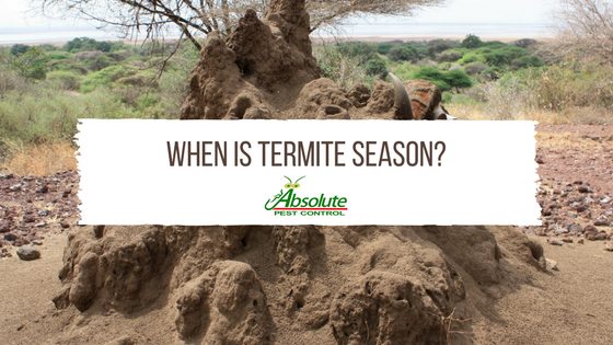 When is termite season image APC G Blog Top.png