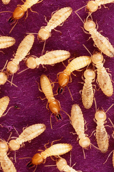 Ways to Keep Termites Away -