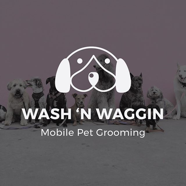 My dogs just got groomed and let's just say it decided to snow and rain in the same day... thankful for whitening shampoo 🐶❄️ #mobilepetgroomer #doggroomer #washnwagginmobilepetgrooming #logographic