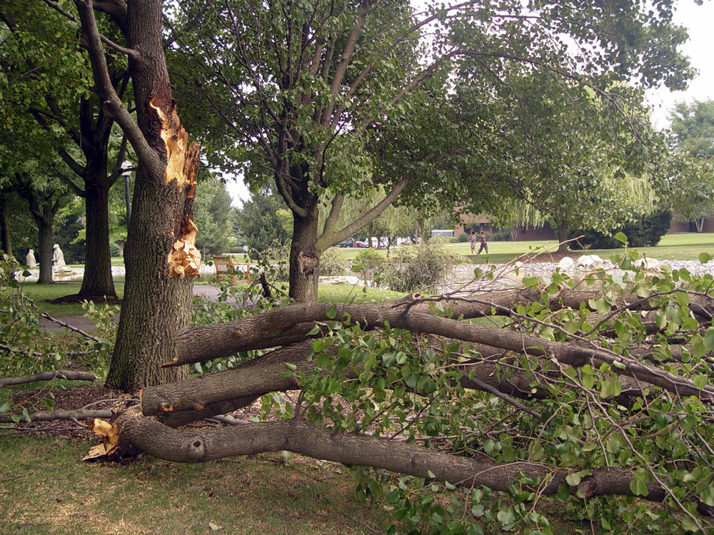 Storm-Damage-To-Tree.jpg