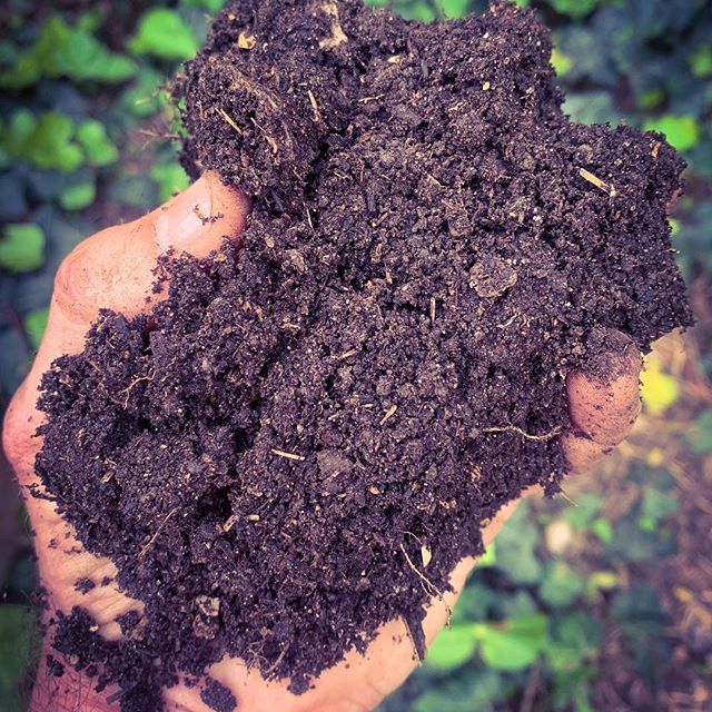 This crumbly, rich handful of soil is the result of a yearlong process of composting kitchen scraps, chicken and duck poop, leaves, garden clippings, and scrap paper/cardboard.  When you align with nature, there's no such thing as waste.  Good things come to those who wait.