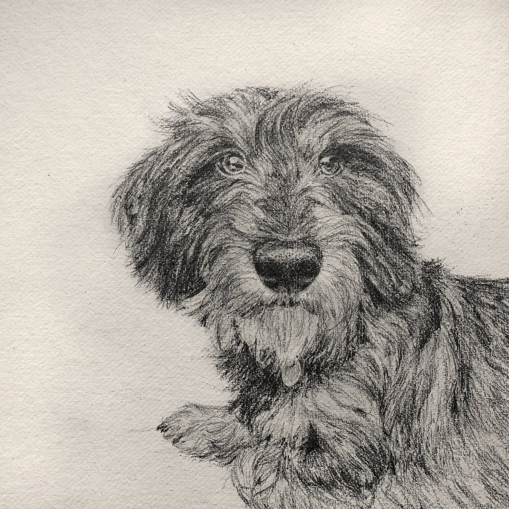 Percy, pencil on hand made paper