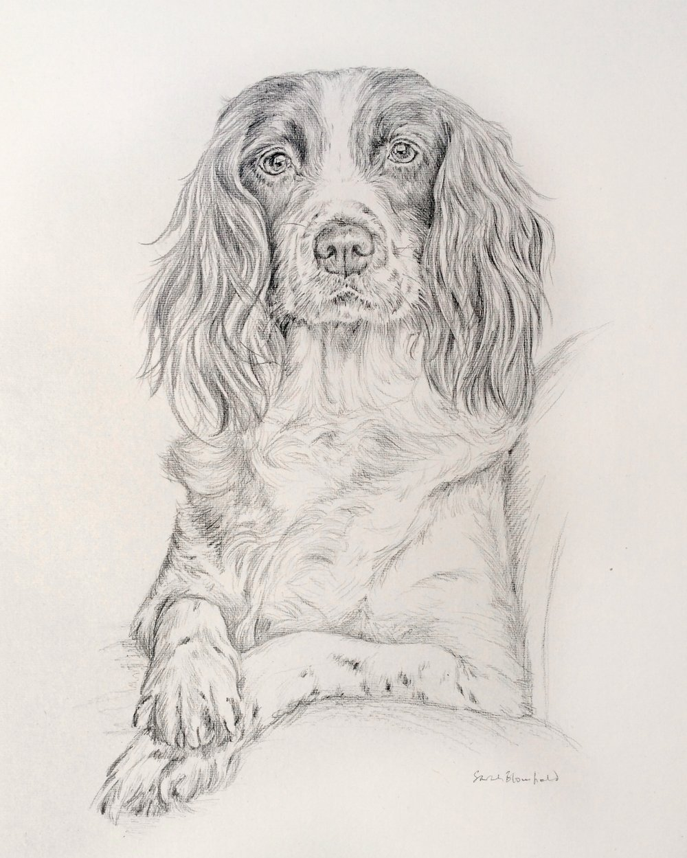 Spaniel on sofa, pencil on hand made paper