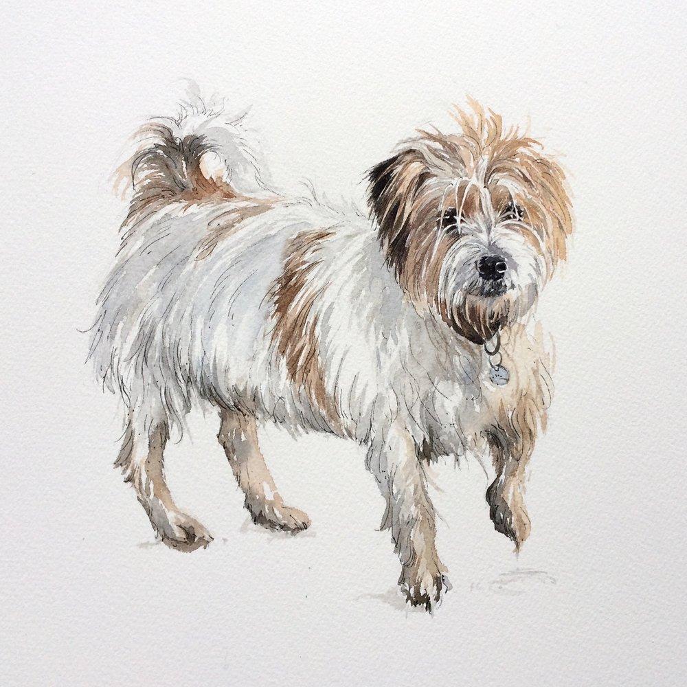 Harry, watercolour