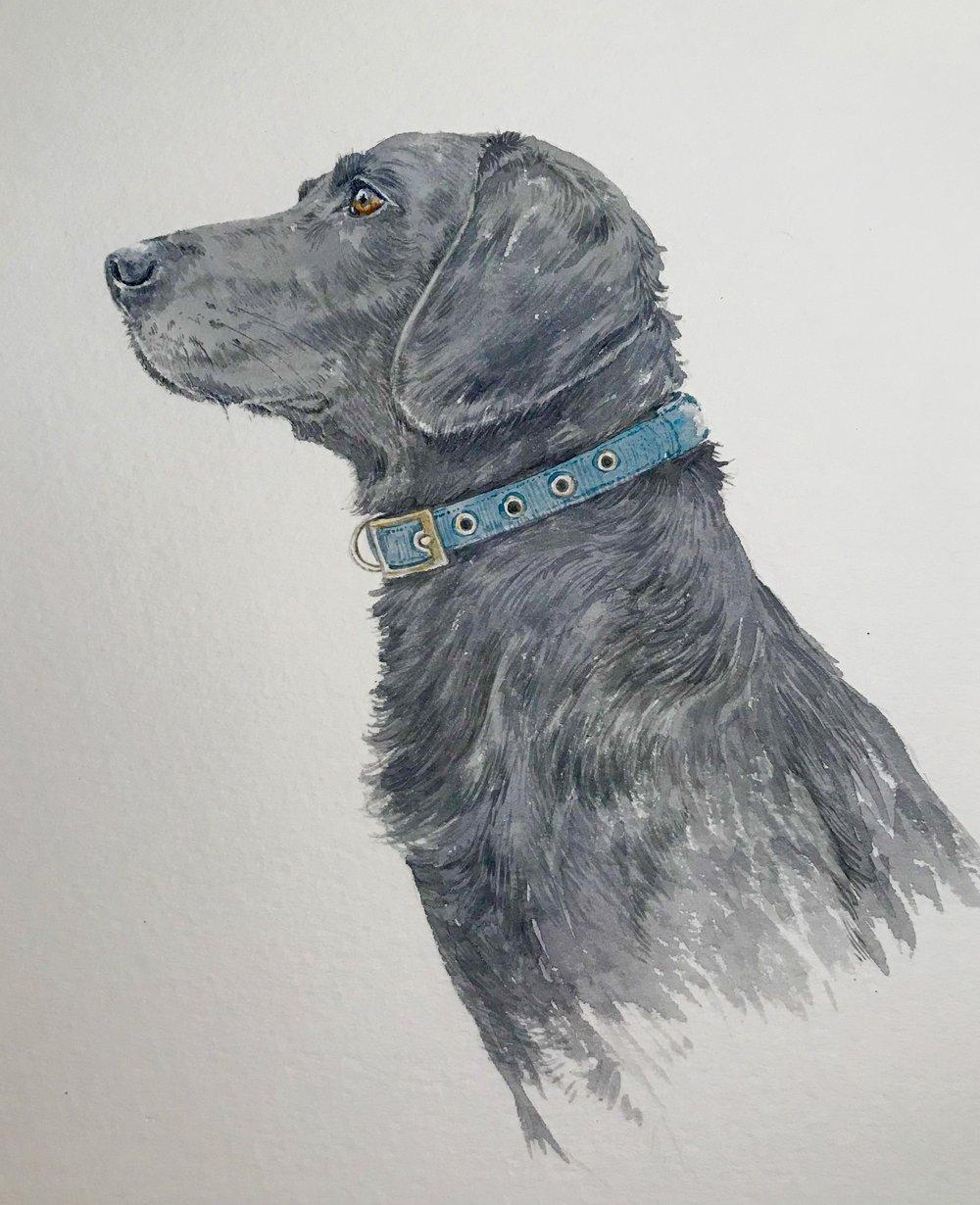 """""""Ace"""" the black lab. Watercolour, 15 cm x 10cm"""