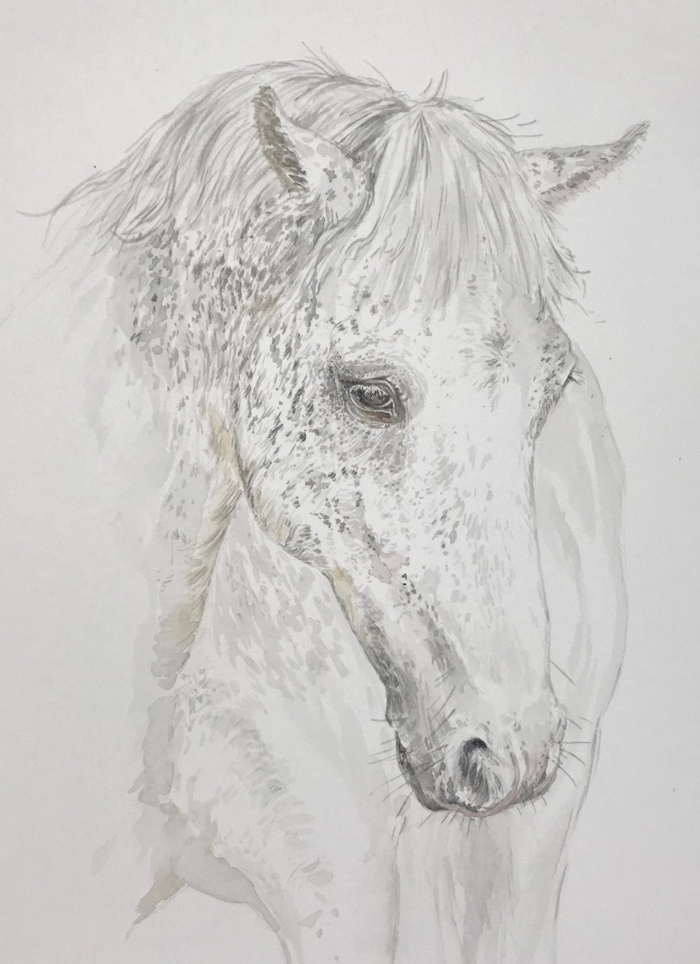 Anne's horse. Watercolour