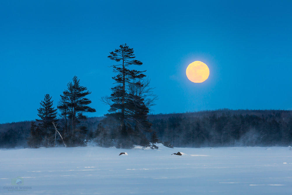 Millinocket Lake Moonrise.jpg