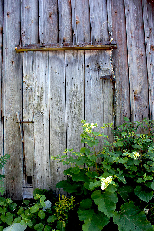 Maryhill Farm Small Barn Door.jpg