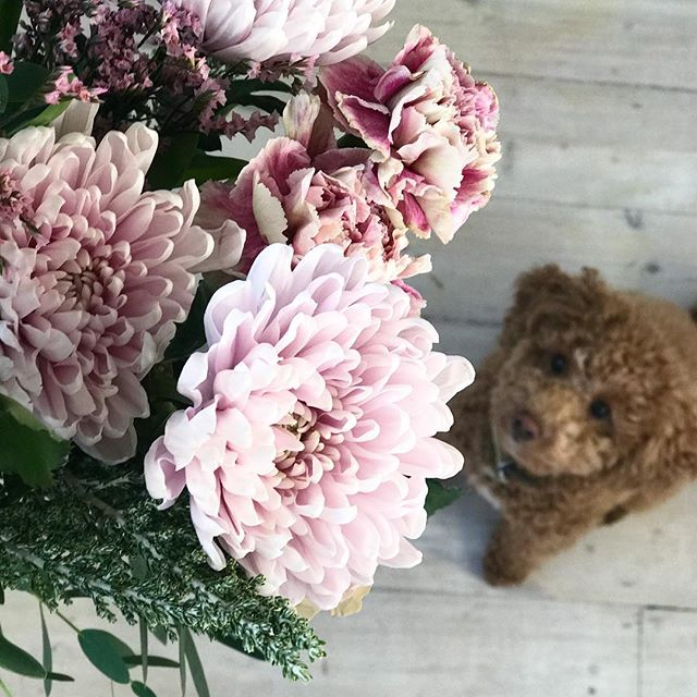 Puppies and fresh flowers. What a dream. This bunch are from @bloomandwild picked by @jasminehemsley. The puppy is @elmocam obvs...
