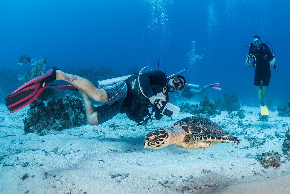 Scuba Instructor taking a photo of a hawksbill turtle