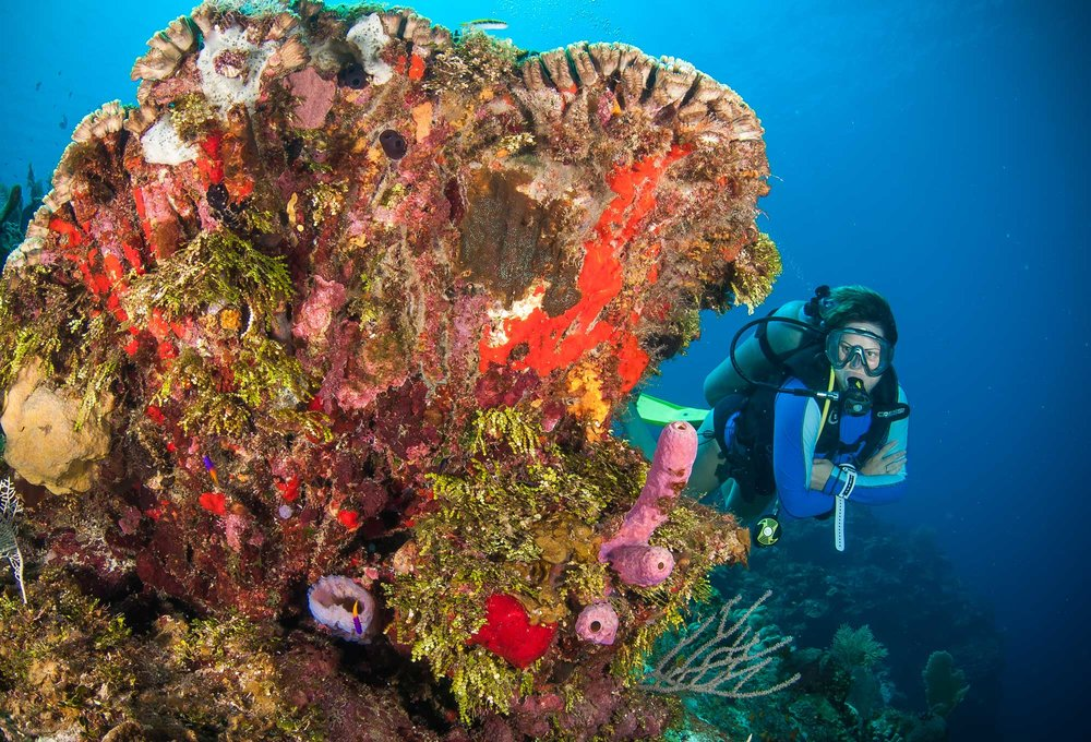 A divemaster student appreciating the beauty of Roatan's colourful reef.