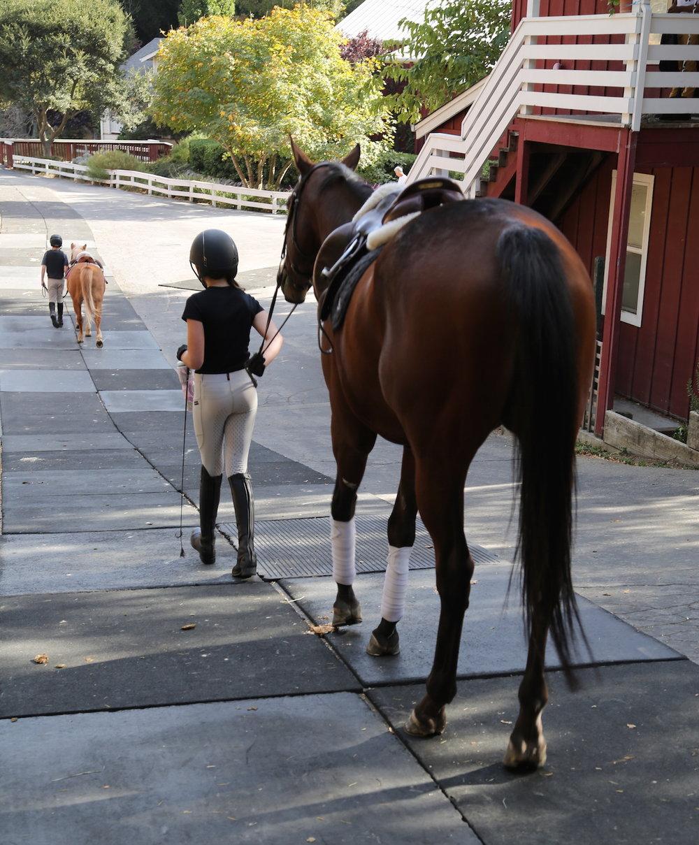 Baywood Equestrian Center