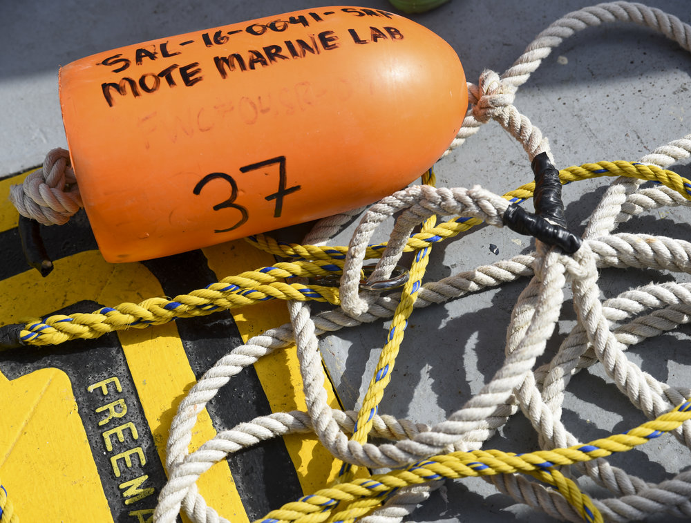 An orange floater lies on the outside deck of the R/V Bellows. The brightly-colored floater was attached via rope to a baited hook, which was left in the ocean in the hopes of attracting a shark. After a shark was captured, it was brought on board, studied, and then released back into the water.