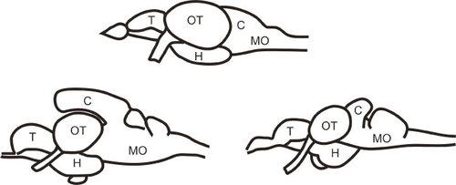 nov 1 2013 neuroanatomy stephen wilson - Neuroanatomy Coloring Book