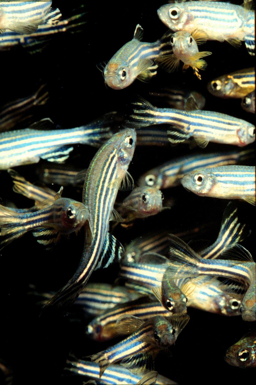 LR4 fish.jpg