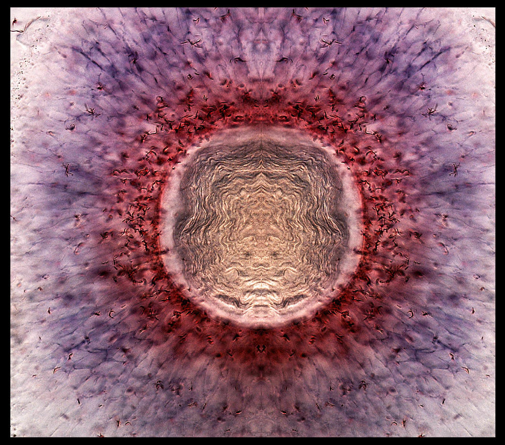 Sunrise in the eye: zebrafish retina