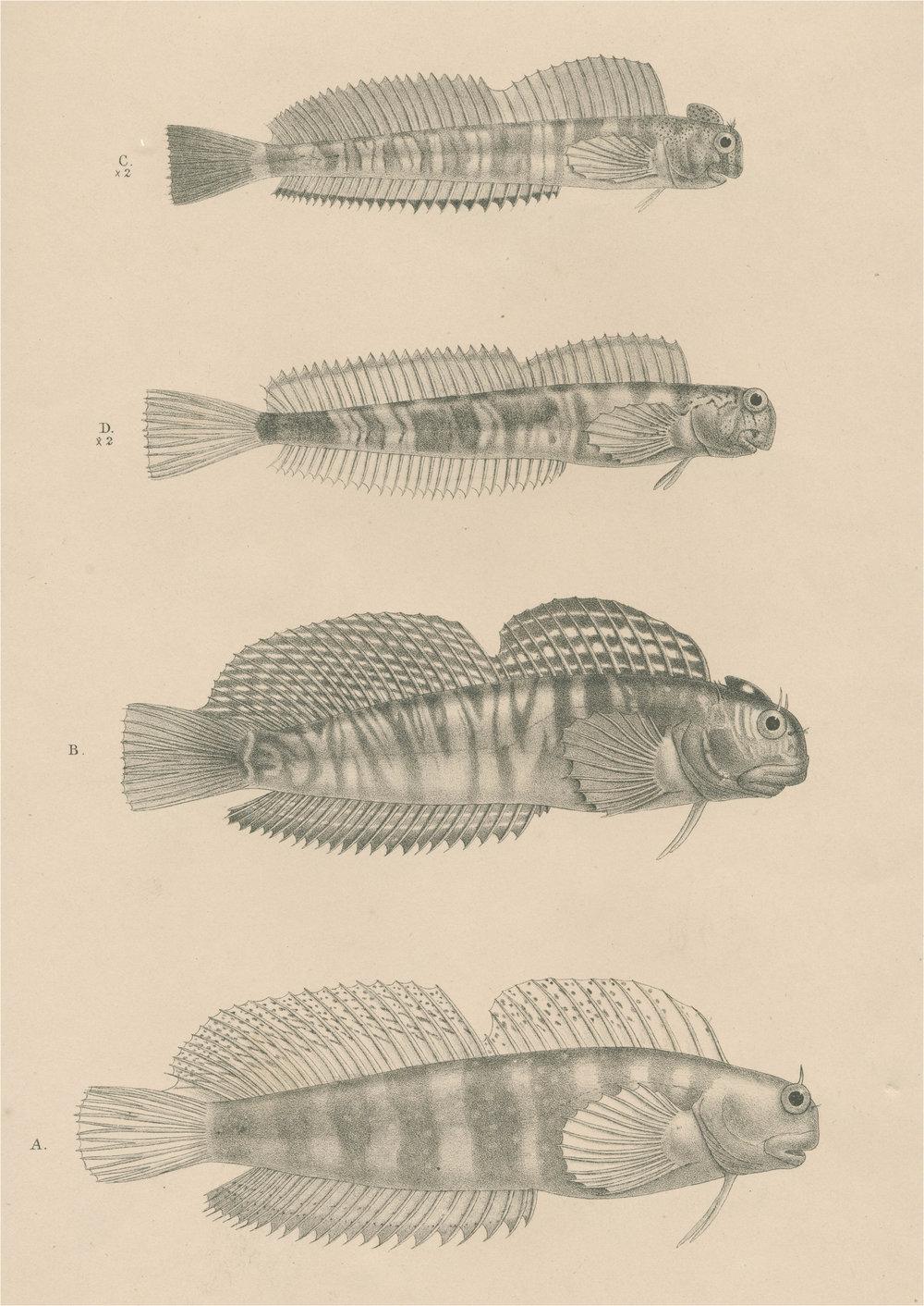 NoN3_wierd fish.jpg