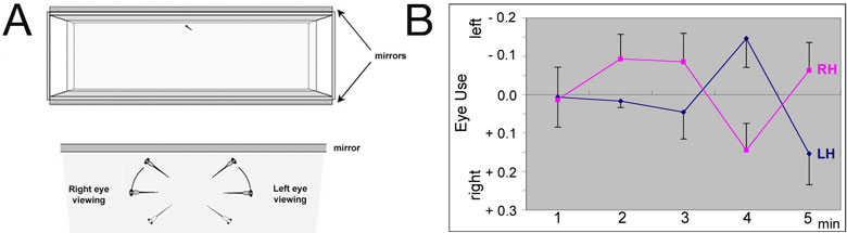 Figure 2. fsi fry with reversed visceral and brain asymmetries show reversal of eye preference when viewing their own reflection. (A) The top panel shows a schematic of the mirror tank used in the test, the bottom panel how we score which eye is used by the fry for viewing. (B) Normal fry (LH, blue line) show a slight bias to use their right eye initially, but then switch to left eye use and back to left eye use. This bias is reversed in fsi fry with reversed asymmetries (RH, pink line).