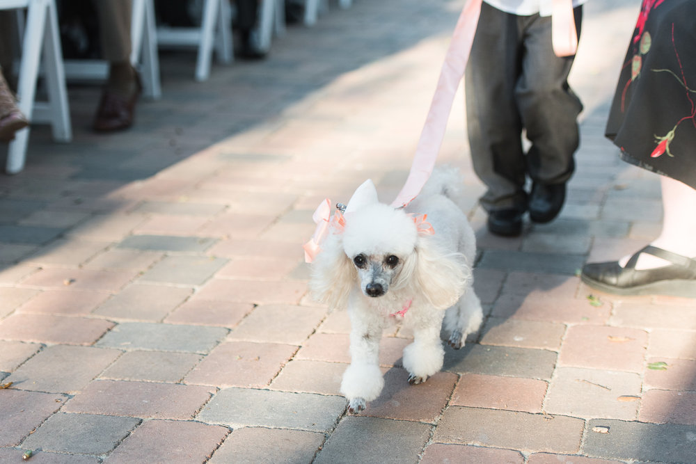Mt. Woodson Castle Wedding // Brandi Welles Photographer // Dog Ring Bearer