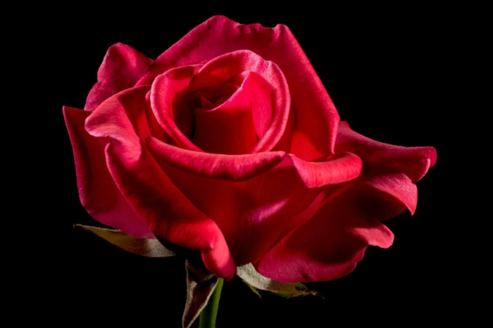 The Rose - a sacred healing symbol, and an invaluable psychic tool you'll learn in my Beginner's Psychic Development program!