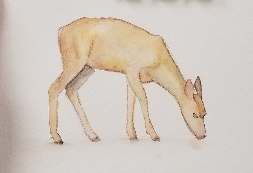 Watercolor Deer Sketch