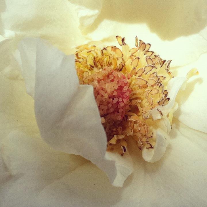 rosecenter.jpg