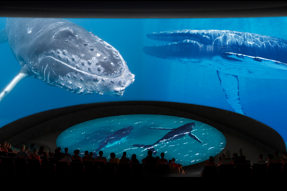 5_Honda_Pacific_Visions_Theater_Whales_CourtesyofAquariumofthePacific_web.jpg