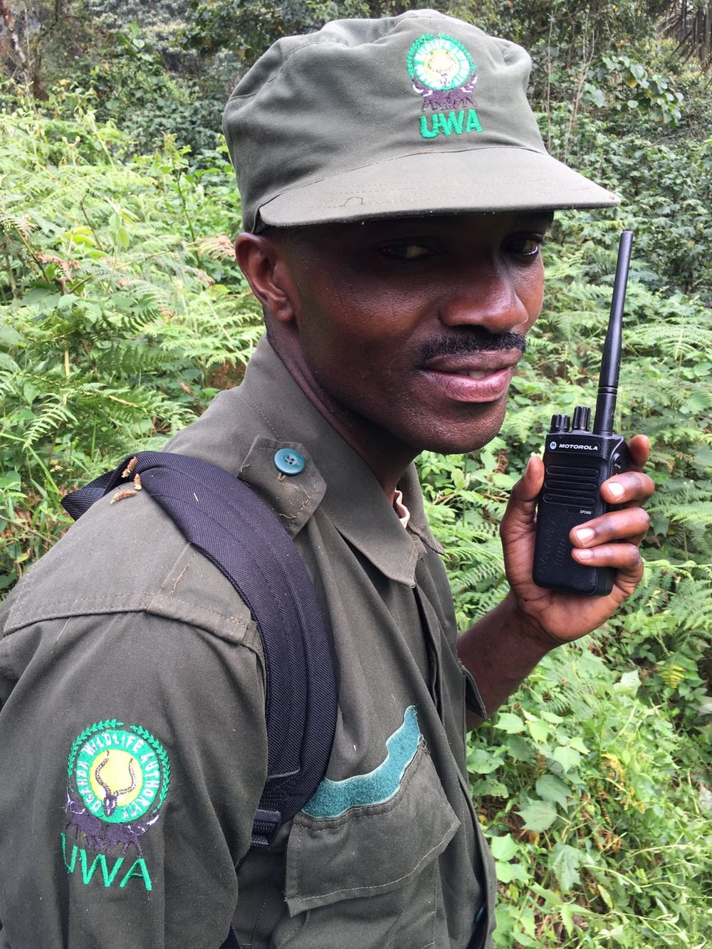 The Ultimate Guide To Mountain Gorilla Tracking In Uganda 12.jpeg