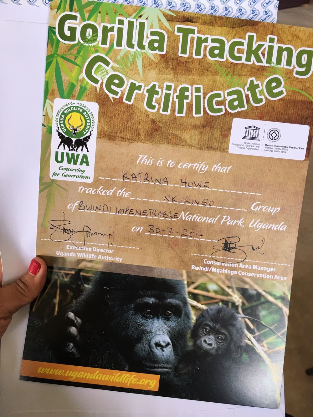 The Ultimate Guide To Mountain Gorilla Tracking In Uganda 22.jpeg