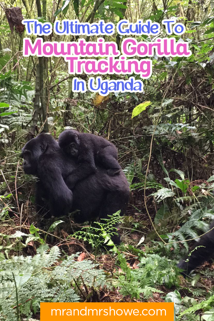 The Ultimate Guide To Mountain Gorilla Tracking In Uganda1.png