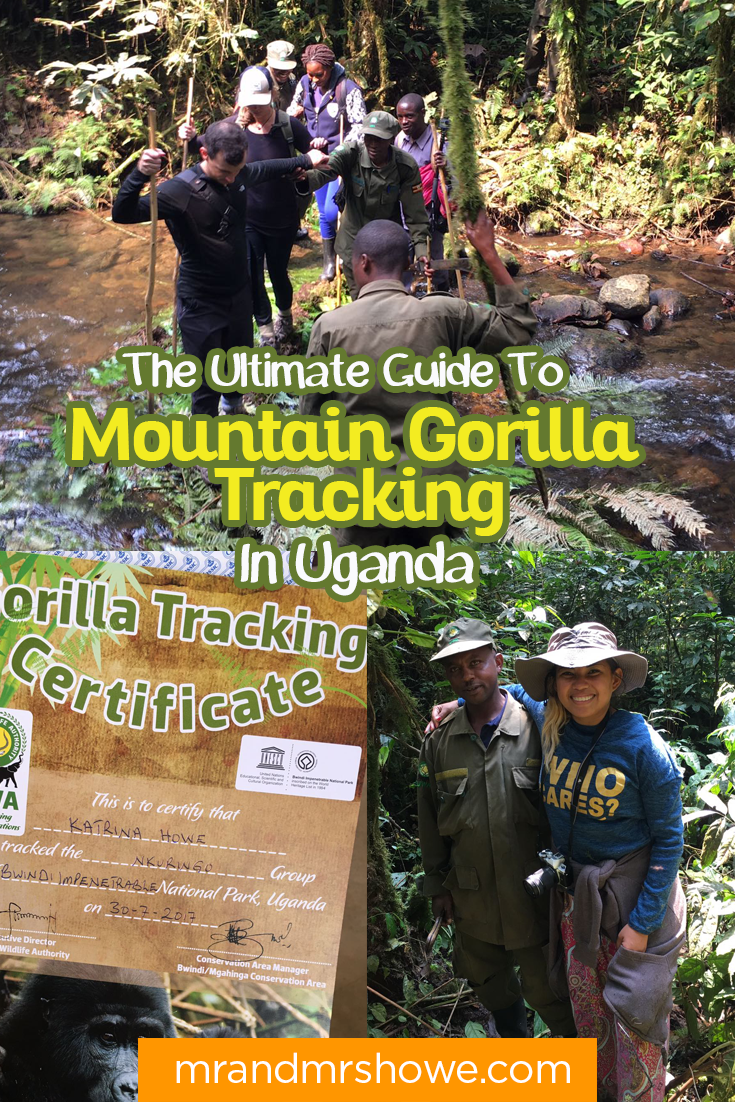 The Ultimate Guide To Mountain Gorilla Tracking In Uganda2.png