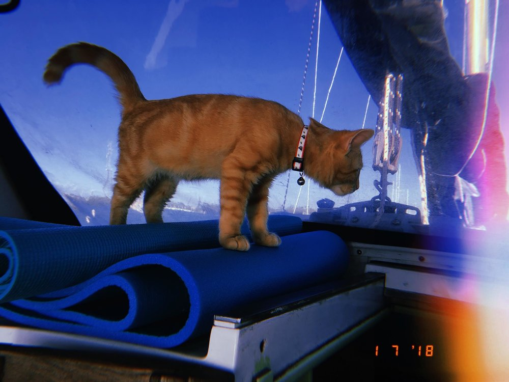 Meet Captain Ahab - Our New Sailor Cat Who Will Sail Around the World With Us