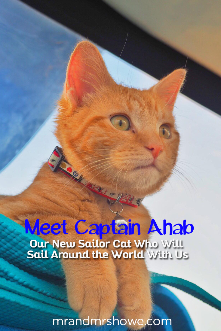 Meet Captain Ahab - Our New Sailor Cat Who Will Sail Around the World With Us1.png