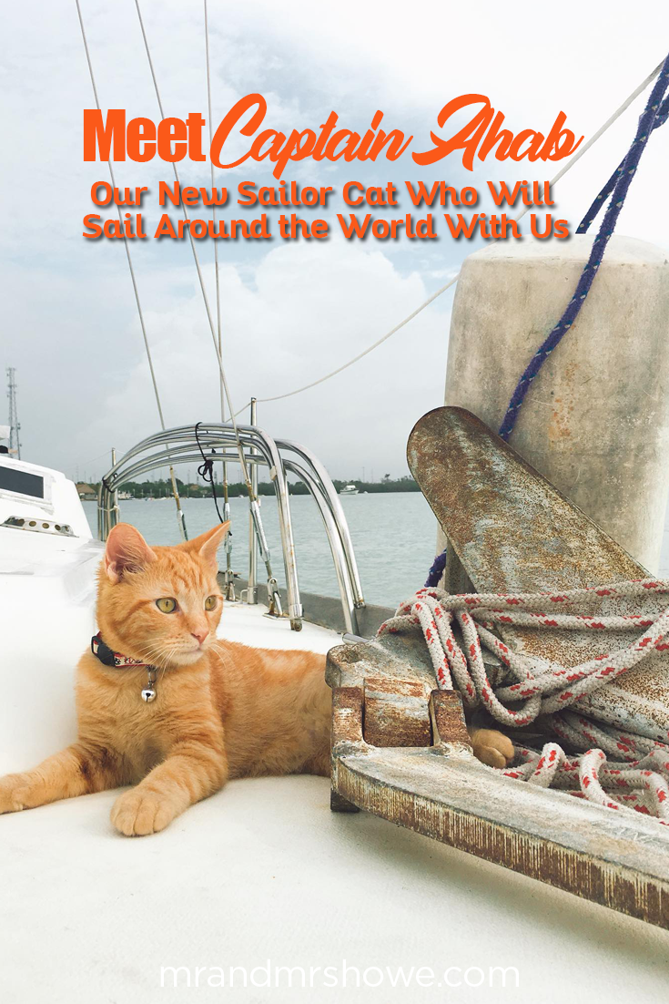 Meet Captain Ahab - Our New Sailor Cat Who Will Sail Around the World With Us2.png